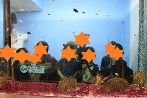 サンピアザ水族館15